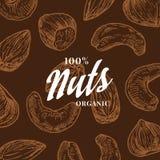 Tarjeta de modelo Nuts dibujada mano Fondo abstracto del bosquejo del anacardo, de la avellana y de la almendra del vector Foto de archivo