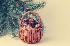 Tarjeta de Navidad Cesta con los conos contra ramas verdes del abeto Foto de archivo libre de regalías