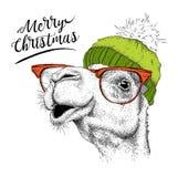 Tarjeta de Navidad con el camello en sombrero del invierno Diseño de letras de la Feliz Navidad Ilustración del vector Imagen de archivo
