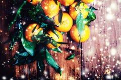 Tarjeta de Navidad con los mandarines festivos, la nieve y el garl defocused Imagenes de archivo