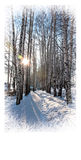 Tarjeta de Navidad Día soleado hermoso del invierno Fotografía de archivo libre de regalías