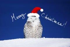 Tarjeta de Navidad del búho Nevado Imágenes de archivo libres de regalías