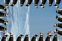 Tarjeta de Navidad del marco del pingüino Imágenes de archivo libres de regalías