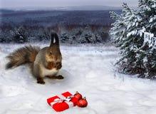 Tarjeta de Navidad La ardilla está mirando la noche roja de la caja de regalo y de las bolas de la Navidad en el bosque Imágenes de archivo libres de regalías