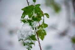 Tarjeta de Navidad, rama en nieve Foto de archivo libre de regalías
