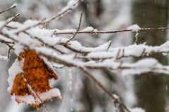 Tarjeta de Navidad, rama en nieve Imágenes de archivo libres de regalías