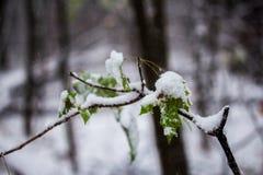 Tarjeta de Navidad, rama en nieve Fotos de archivo
