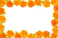 Tarjeta de nota con las flores anaranjadas. Fotos de archivo libres de regalías