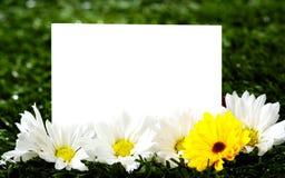 Tarjeta de nota en blanco con las margaritas imagen de archivo libre de regalías
