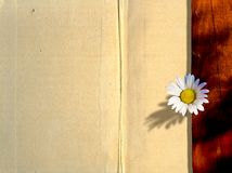 Tarjeta de notas de la manzanilla Foto de archivo