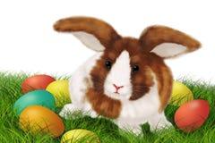 Tarjeta de pascua con el conejo Fotos de archivo libres de regalías