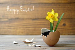 Tarjeta de pascua: Flores de la primavera en cáscara de huevo Fotos de archivo