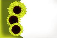 Tarjeta de regalo del girasol Foto de archivo libre de regalías