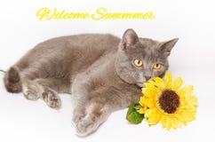 Tarjeta de verano con el gato y el girasol imágenes de archivo libres de regalías