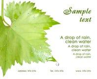 Tarjeta de visita. Hojas mojadas de la uva aisladas Imagen de archivo libre de regalías
