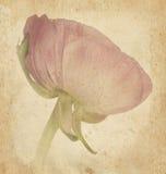 Tarjeta del día de fiesta de la flor de la belleza del vintage en el papel viejo Fotos de archivo libres de regalías