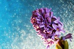Tarjeta del día de fiesta de la primavera con la flor del jacinto de la lila en el cielo azul delic Fotografía de archivo libre de regalías