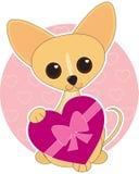 Tarjeta del día de San Valentín de la chihuahua Fotos de archivo