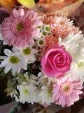 Tarjeta del día de San Valentín de la flor Imagenes de archivo
