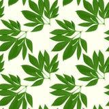 Tarjeta del diseño floral del vector Imagen de archivo libre de regalías
