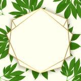 Tarjeta del diseño floral del vector Fotografía de archivo