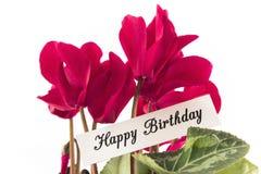 Tarjeta del feliz cumpleaños con el ramo de Cyclamens Fotografía de archivo libre de regalías