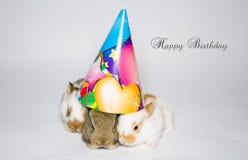 Tarjeta del feliz cumpleaños con tres conejos Imágenes de archivo libres de regalías