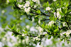 Tarjeta del flor Imagenes de archivo