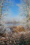 Tarjeta del invierno Foto de archivo libre de regalías