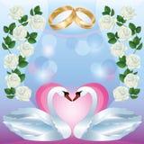 Tarjeta del saludo o de la invitación de la boda con los cisnes stock de ilustración