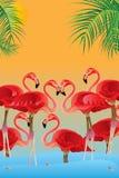 Tarjeta del sol del amor de Flamigo libre illustration