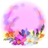 Tarjeta del vector con las flores del freesia Foto de archivo libre de regalías