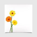 Tarjeta del vector con las flores del gerbera Eps-10 Foto de archivo libre de regalías