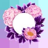 Tarjeta del vector con las peonías y las hojas rosadas de la púrpura Fotografía de archivo
