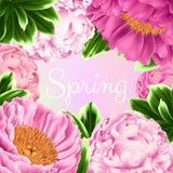 Tarjeta del vector con las peonías y las hojas rosadas del verde Fotografía de archivo libre de regalías