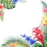 Tarjeta del vector de la acuarela con las hojas tropicales y las flores exóticas brillantes aisladas en el fondo blanco Imagen de archivo libre de regalías