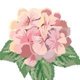 Tarjeta del vector del vintage con las flores del geranio de la acuarela Fotografía de archivo libre de regalías