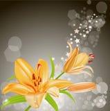 Tarjeta del vector: lirios anaranjados Imagen de archivo