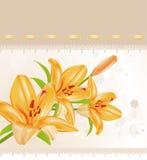 Tarjeta del vector: lirios anaranjados Fotos de archivo libres de regalías