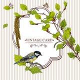 Tarjeta del vintage con las ramitas del abedul y el Tit del pájaro Foto de archivo