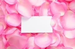 Tarjeta en blanco con los pétalos color de rosa Fotografía de archivo