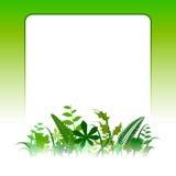 Tarjeta en blanco de Eco Imagenes de archivo