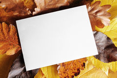 Tarjeta en blanco sobre las hojas de otoño Fotos de archivo libres de regalías
