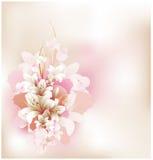 Tarjeta floral Fotografía de archivo libre de regalías