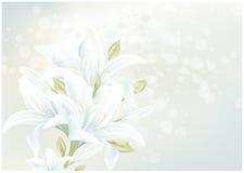 Tarjeta floral con el lirio Imagenes de archivo