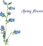 Tarjeta floral de la acuarela con la campánula Fotos de archivo libres de regalías