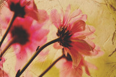 Tarjeta floral de la vendimia Fotografía de archivo libre de regalías