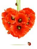 Tarjeta floral del amor (corazón de la amapola) Foto de archivo