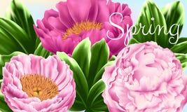 Tarjeta floral del vector con las peonías y las hojas Imagenes de archivo