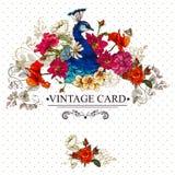 Tarjeta floral del vintage con el pavo real Fotos de archivo libres de regalías
